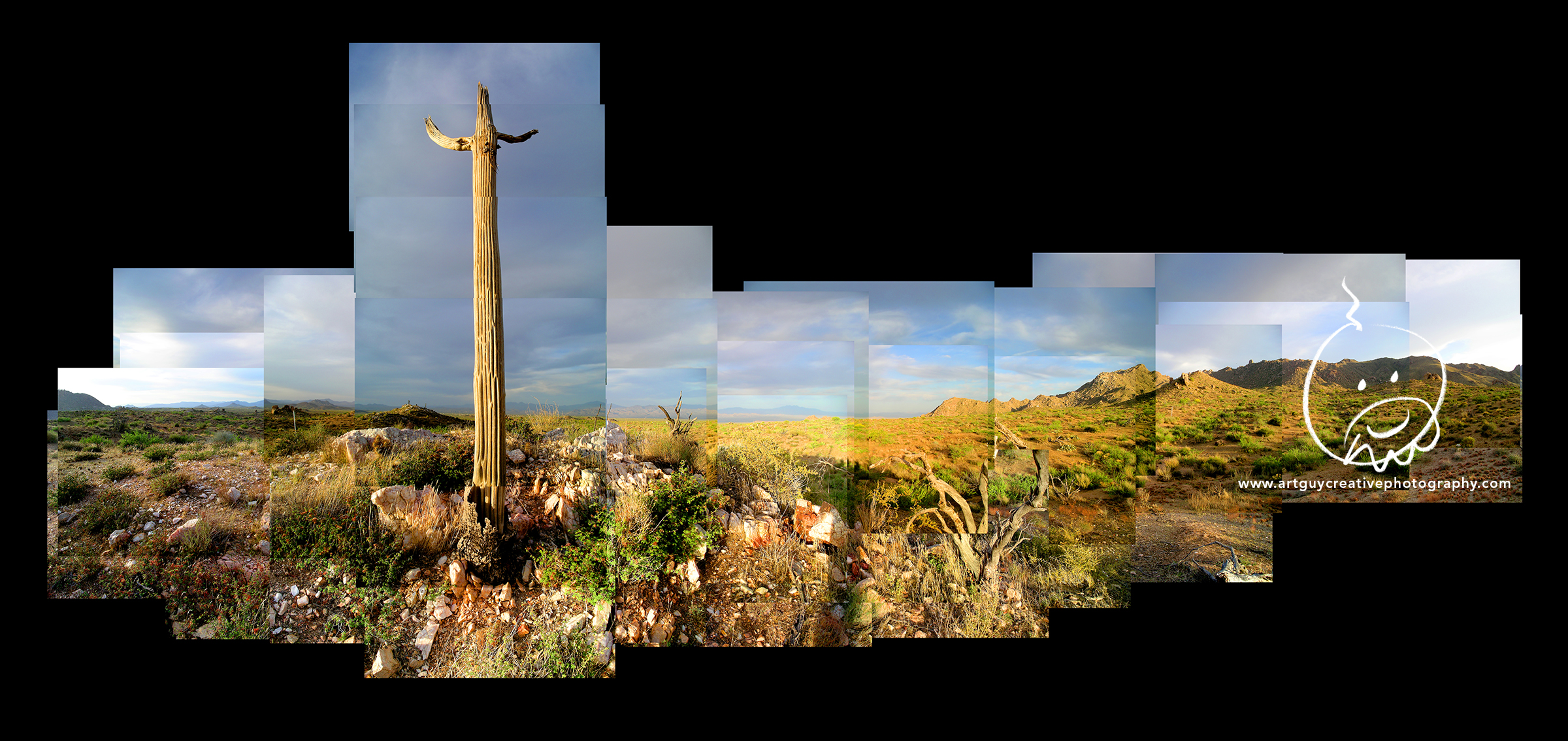 Arizona Desert Photography Cactus