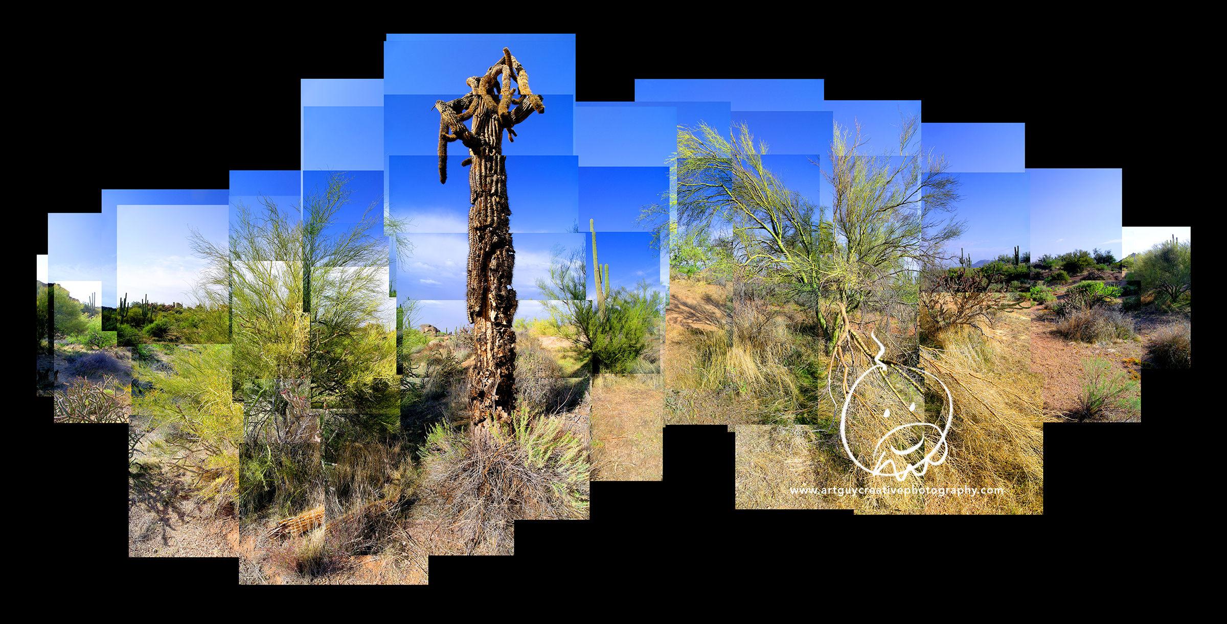 Arizona Desert Photography Desert Skeleton Cactus