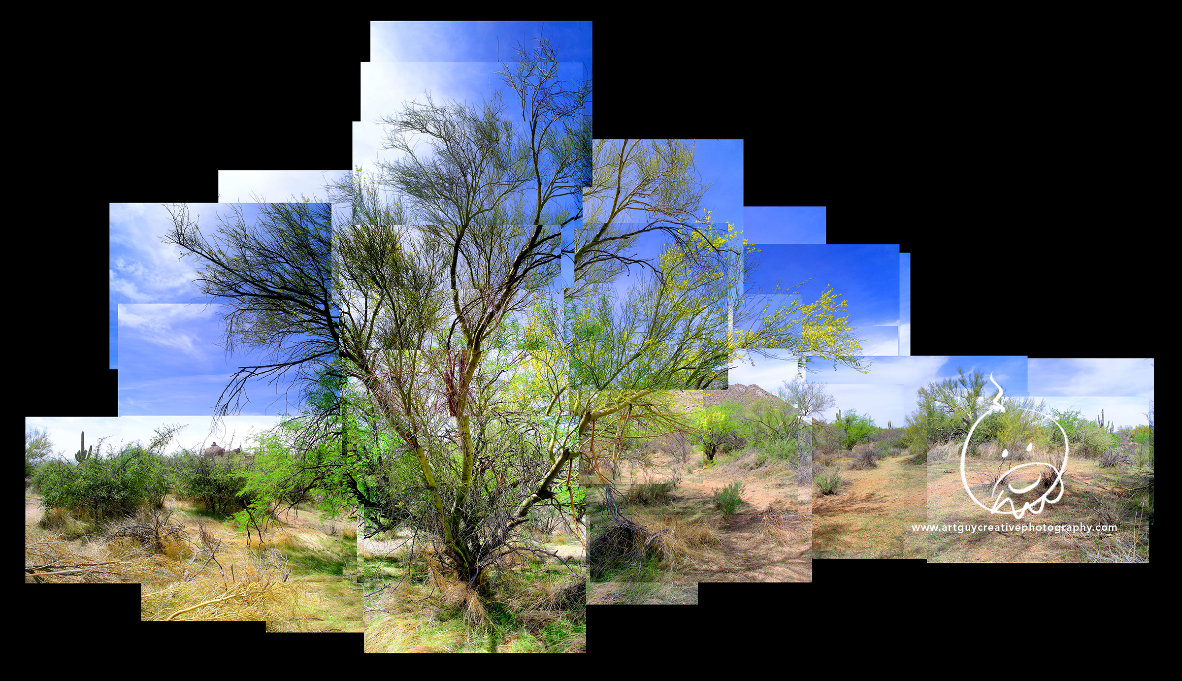 Arizona Desert Photography Two Trees